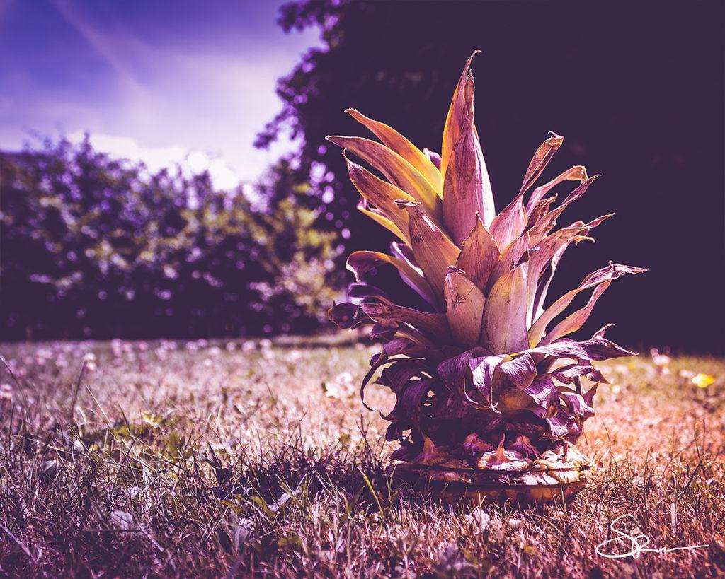 Ananas_klein